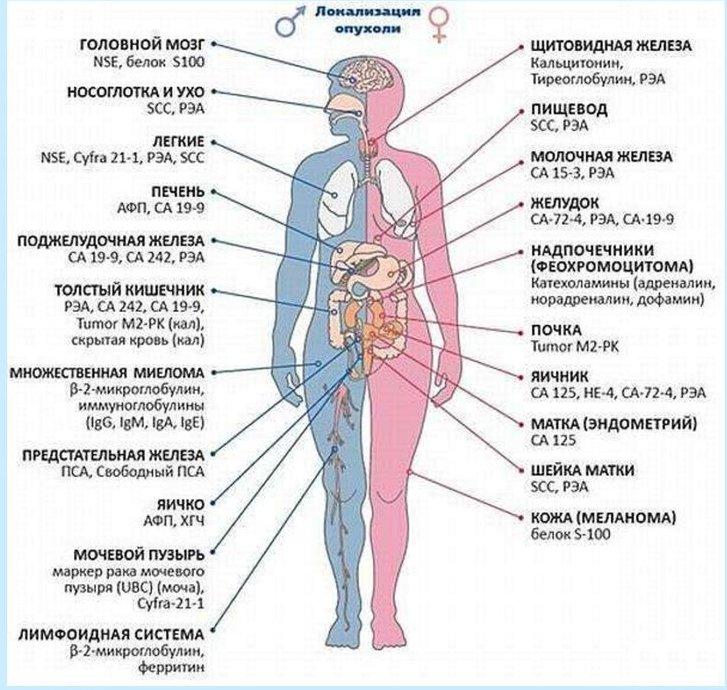 сдача анализов для диагностики рака
