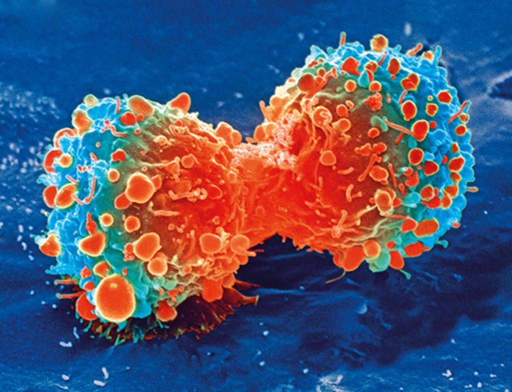 вирус герпетический