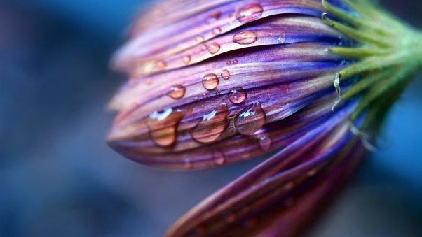 поднимающийся цветок