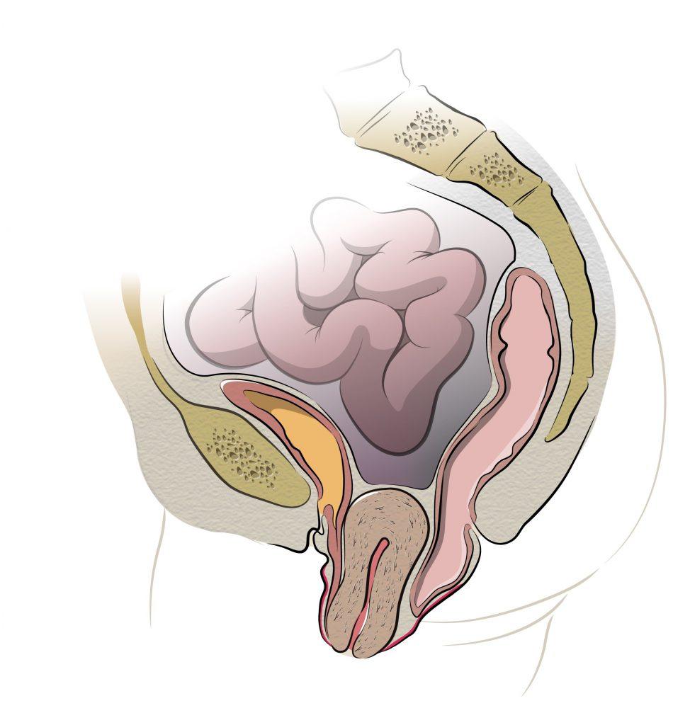 укрепить мышцы тазового дна