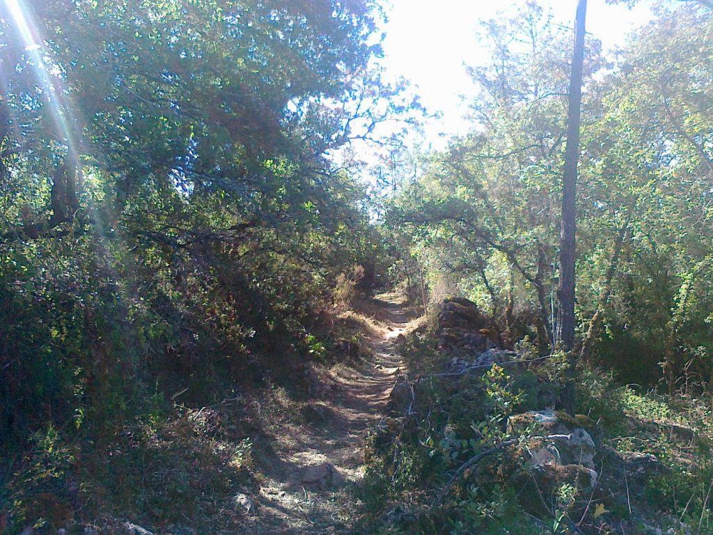 через лес по тропе