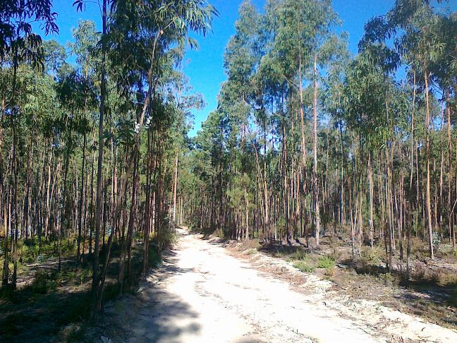 дорога через лесок