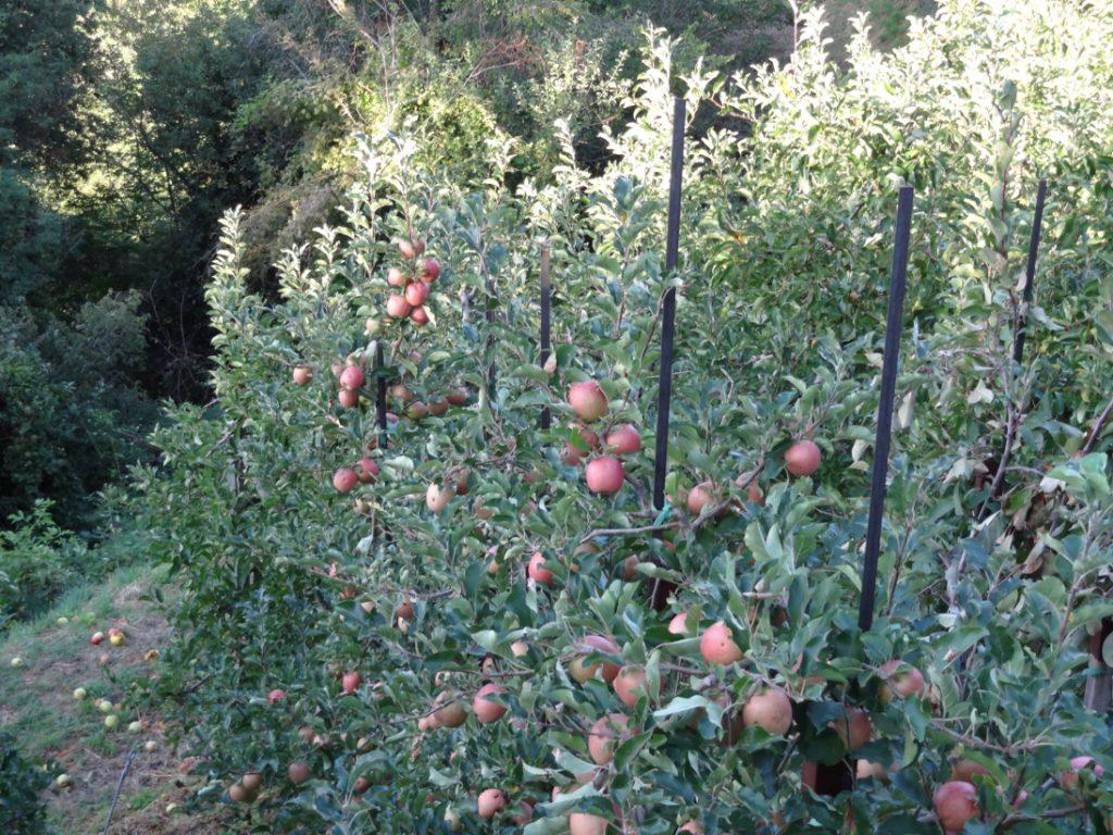 овощи-фрукты при онкологии