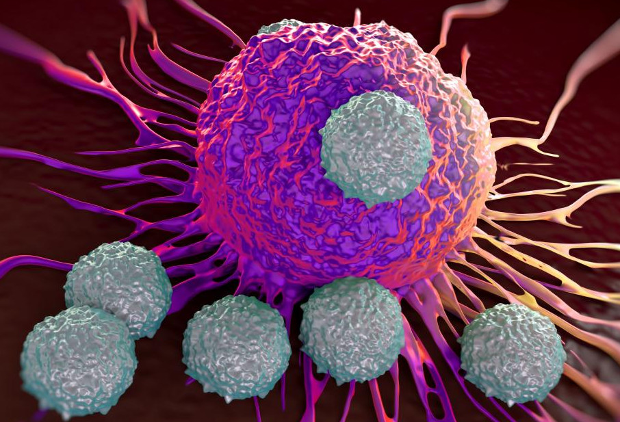 противораковый иммунитет